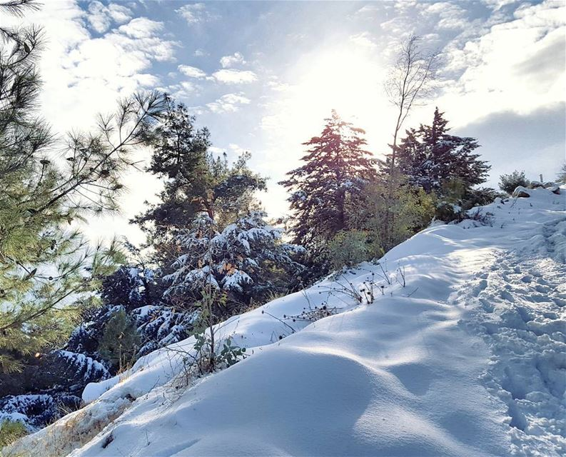 Beautiful but Cold❄☃️ (Mount Lebanon Governorate)