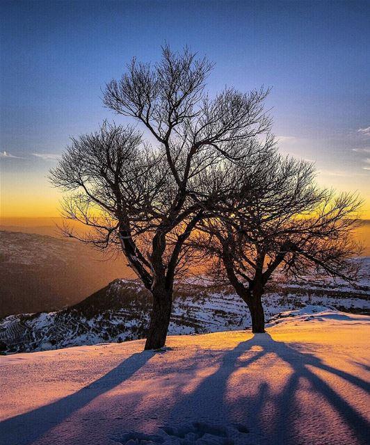 light ray snow tree mountains valley cold winter sunset lebanon ... (Qanat Bakish, Mont-Liban, Lebanon)
