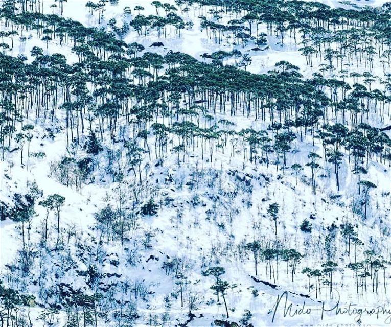 ayndara lebanon mountains snow instagram pine livelovelebanon lebanon... (`Ayn Darah, Mont-Liban, Lebanon)