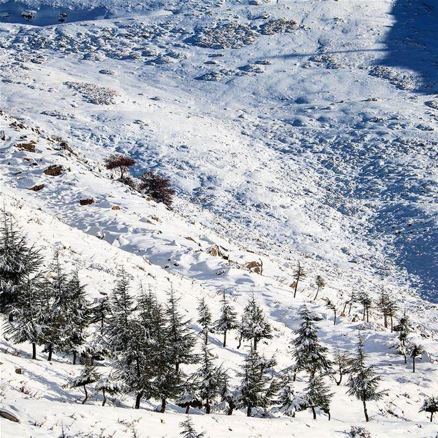 Random Scene! ❄____________________________________________________... (Faraya, Mont-Liban, Lebanon)