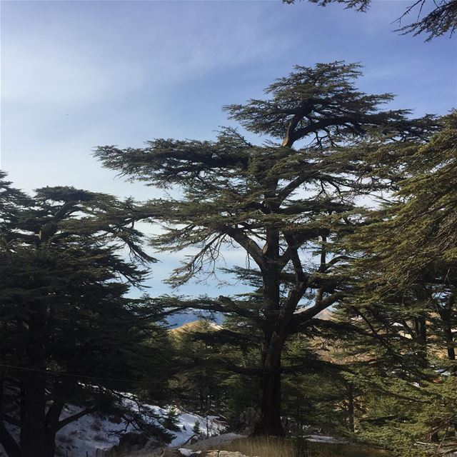 lebanon cedars mountains snow livelovelebanon beautifullebanon ... (Cedars of God)