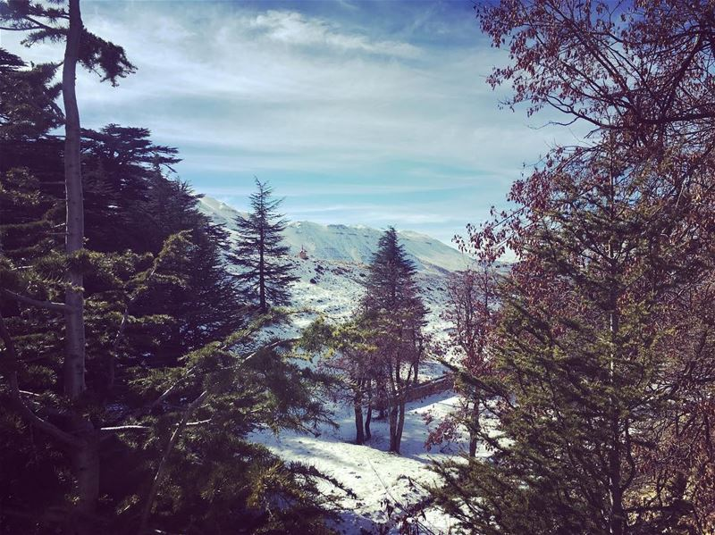 peeksthe cedars on a sunny winter day❄️ winter winterlove sunnydays ... (Cedars of God)