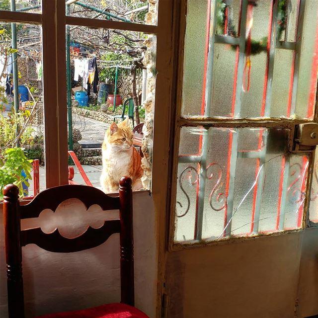 Just checking-out the visitors. interiors homesweethome🏡 ... (Dayr Al Qamar, Mont-Liban, Lebanon)