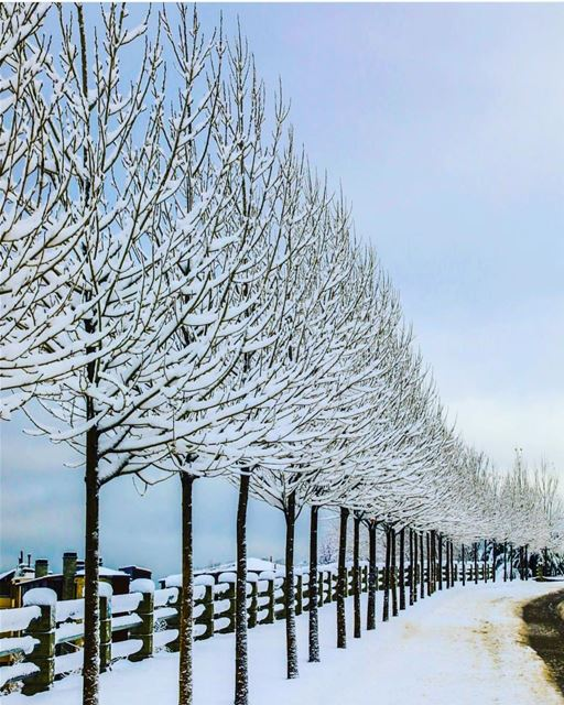 snow christmas lebanon mzaarkfardebian mzaar mzaarskiresort ... (Mzaar Kfardebian)
