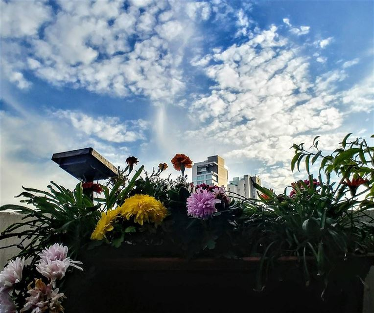 Flowers & Sky!By Ghassan_Yammine skydiving skyline skyporn ... (Beirut, Lebanon)