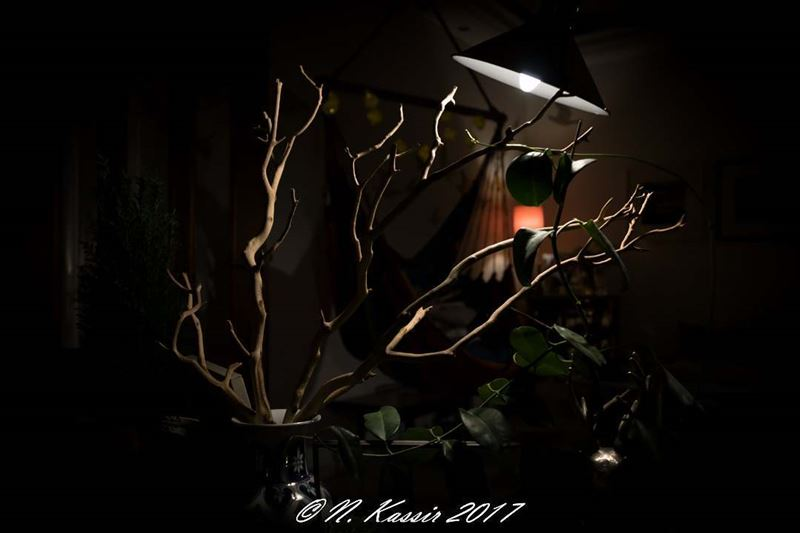 tree  branches  vase  light  Lebanon  ig_great_shots_me  bd_shotz ...