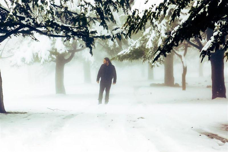 Through the mist forest snow woods newyear mist fog cedars january...