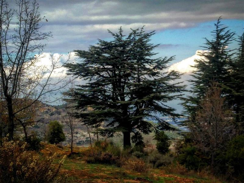 Cedars cedars lebanon north nature winter cold insta art photography cell... (Hadath El-Jubbah, Liban-Nord, Lebanon)