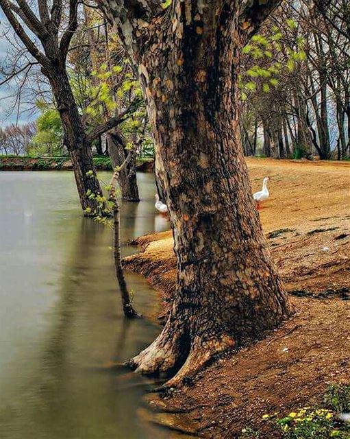 Free your mind on a walk around the lake. Morning igers 💚--------------- (Taanayel- Bekaa)