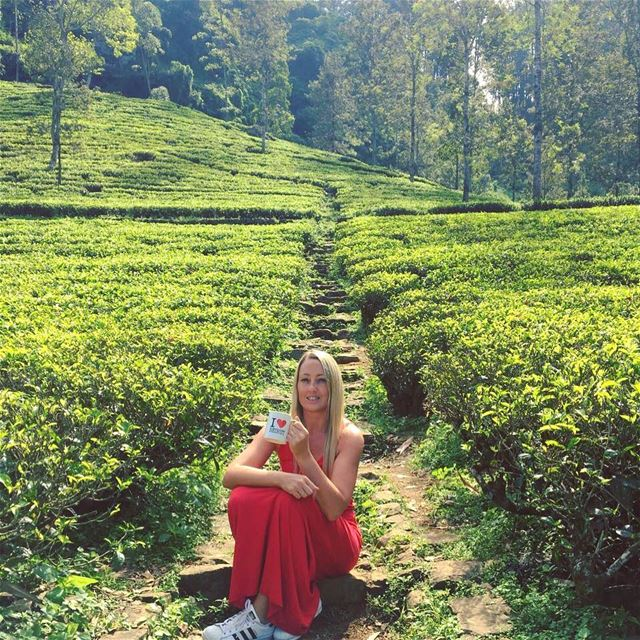 In Ireland we say a cup of tea makes everything better ...no matter how... (Nuwara Eliya,Sri Lanka ''නුවර එලිය'')
