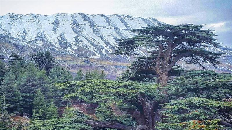Winter wonderland.  Lebanon  LiveloveLebanon  mountains  valley  liban ... (The Cedars of Lebanon)