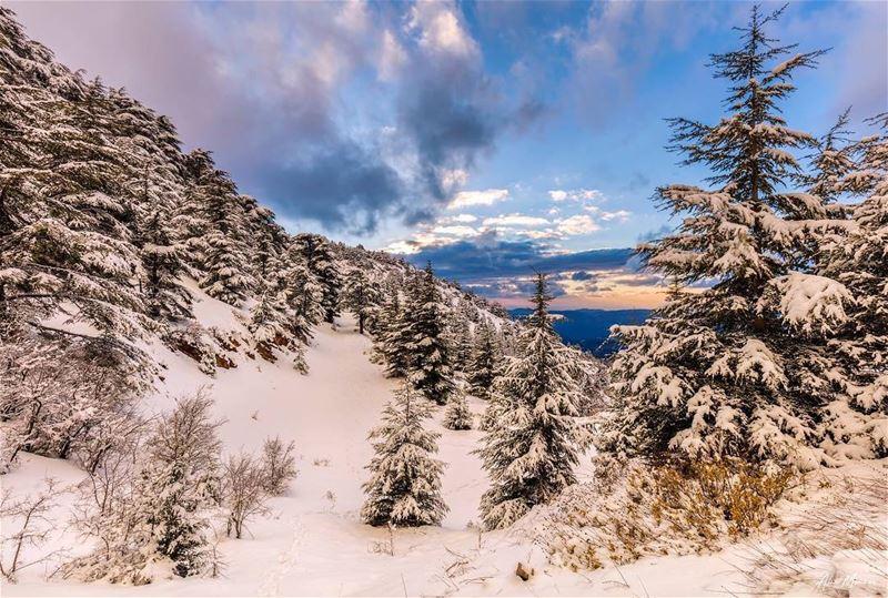 Kingdom of snow.. snow nature shouf lebanon sunset cedars cedar ...