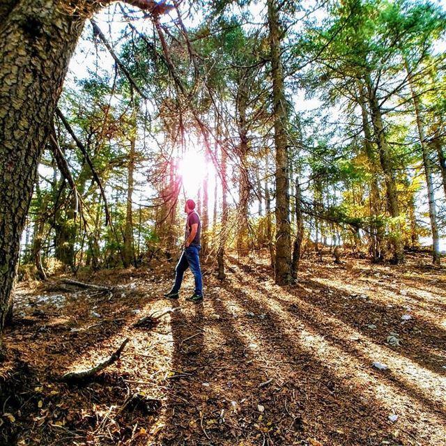 Walk on the wild sidePhoto by @jack_boyadjian ....... nature ... (Al Shouf Cedar Nature Reserve)