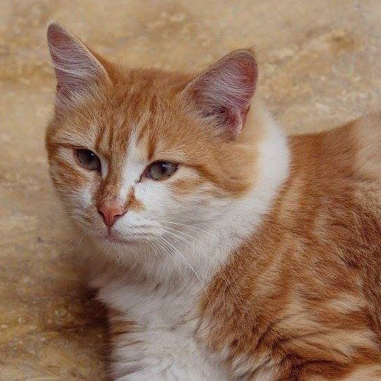 cat 🐺 portrait liveloveanimals animals lebanon walk relax ...