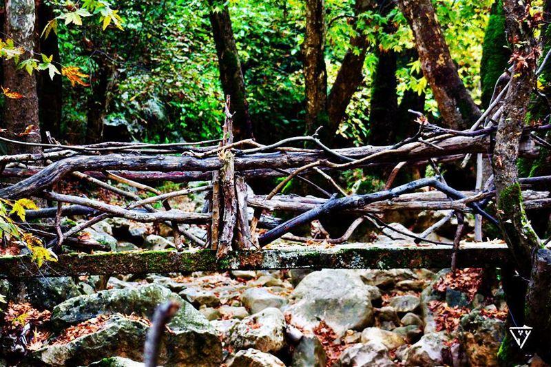 wooden bridge wildlifephotography wildlifephotography birdphotography ...