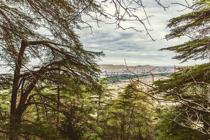 Location : Ain Zhalta Reserve, Lebanon earthpix earthofficial ... (Shouf Cedar Ain Zhalta)