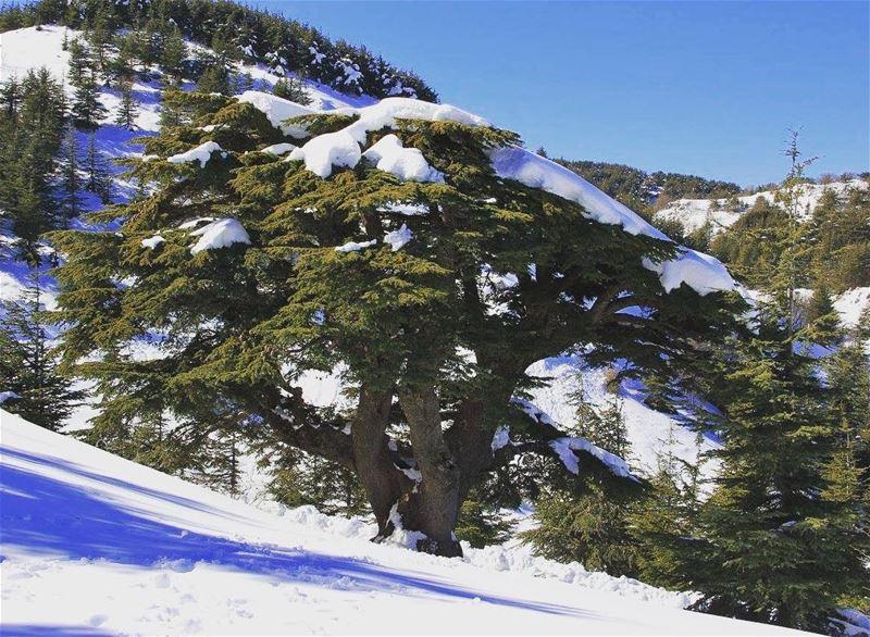 nature lebanon bsharre naturephotography natureza explore... (Bsharri, Lebanon)