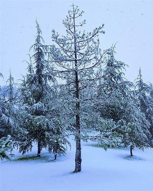 Nature's best ❄❄ snow winter 2018 trees livelovelebanon ... (Mount Lebanon Governorate)