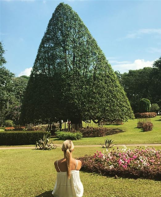 My idea of Perfect ...What's yours ?... keepdiscovering ...... (Royal Botanical Garden - Kandy, Sri Lanka)
