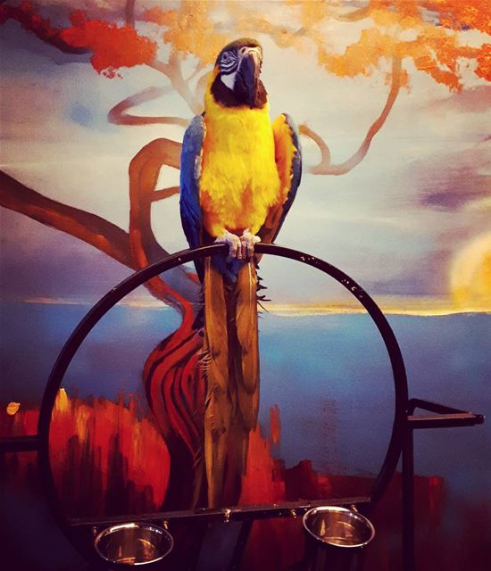 I am ready for the photo Parrot 🐦 trinidadrooftop painting ... (Trinidad Rooftop)