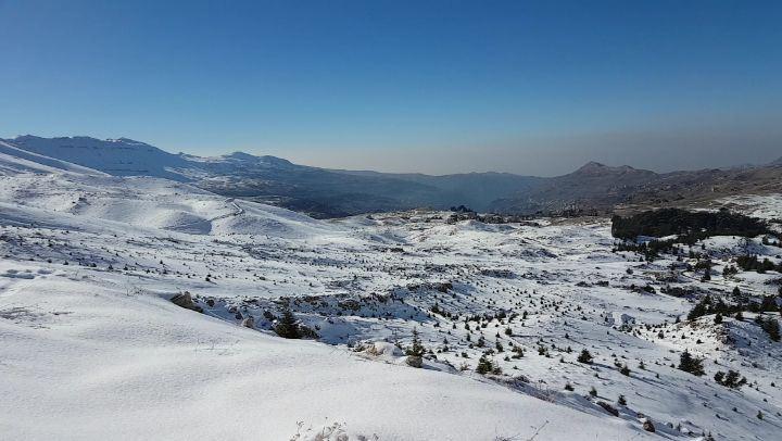 Cedars of Lebanon cedars snow winter livelovelebanon livelovebeirut ... (Cedars of God)