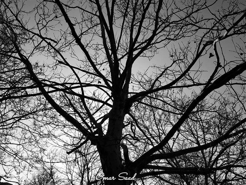 B&W black blackandwhitechallenge white photography photo samsung ... (Sawfar, Mont-Liban, Lebanon)