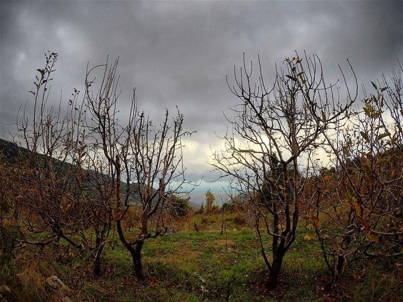natureoftheplanet1 lebanoninapicture yourlifeoutdoors ...