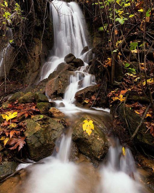 Boundless Falls.. water fall waterfall leaves yellowleaves rock ...