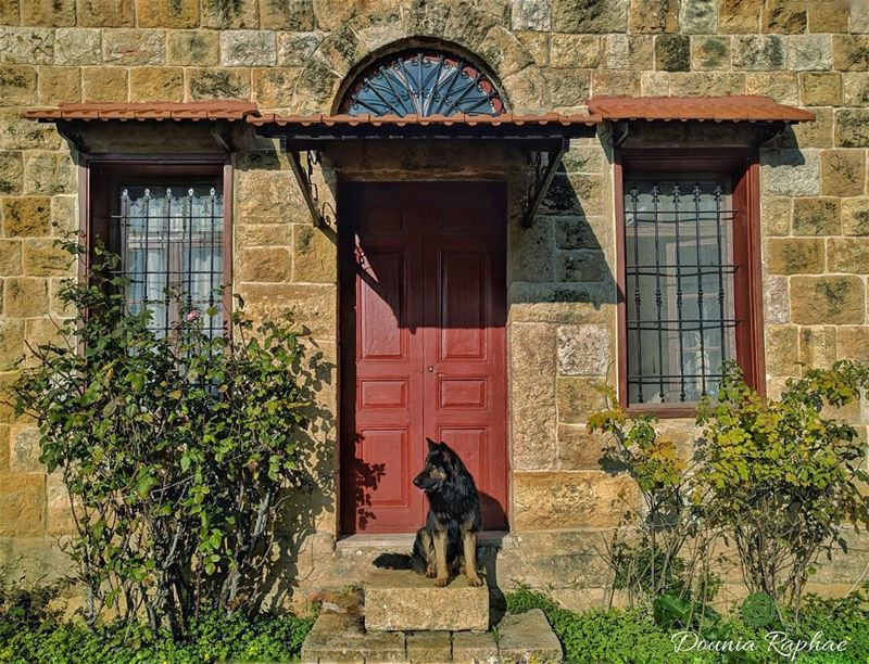 A house is never lonely where a loving dog waits 🐾.... house  dog ... (Mount Lebanon Governorate)