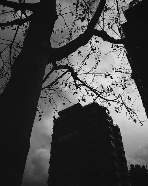 Every moment matters.•••• lebanon tree tree_magic treestagram... (Beirut, Lebanon)
