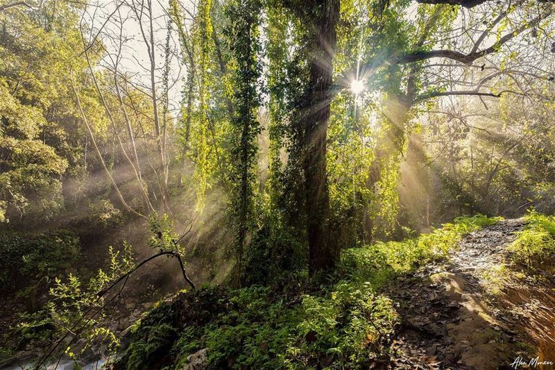 Rays of hope,,, sun  rays  sunrays  hope  positivity  life  tree  leaves ...