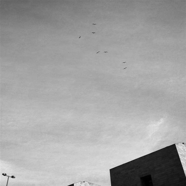 Pero si no puedo volar quiero ver los pájaros en el cielo - ichalhoub in ...