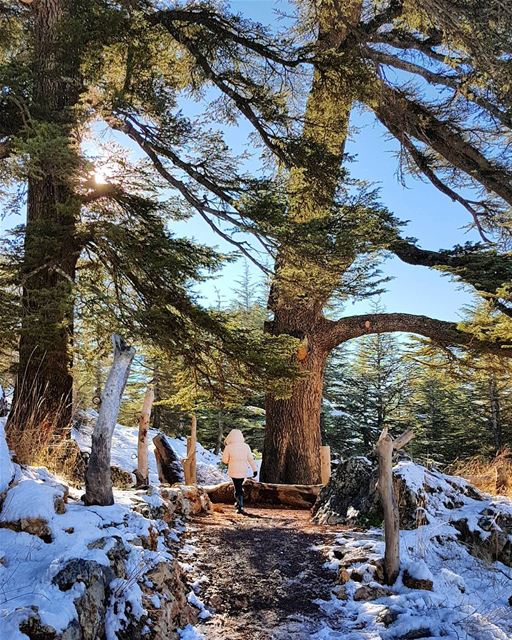 """Some walks you have to take alone....""🌹 cedars forest whatsuplebanon ... (Arz Bcharé)"