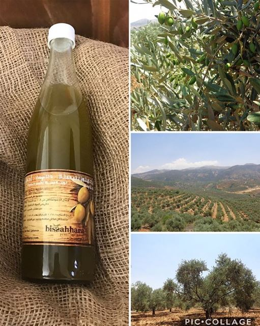 Olive Oil is not only rich in healthy monounsaturated fats, and rich in...