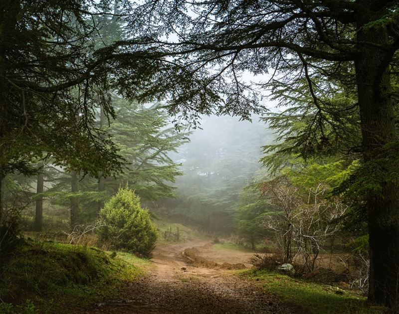 Entering the cedar forest of Hadath El Jebbeh ... (Hadath El-Jubbah, Liban-Nord, Lebanon)