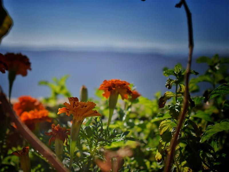 زهرة واحدة قد تكون حديقة،، وصديق واحد يكون العالم 👌 lebanon photography...