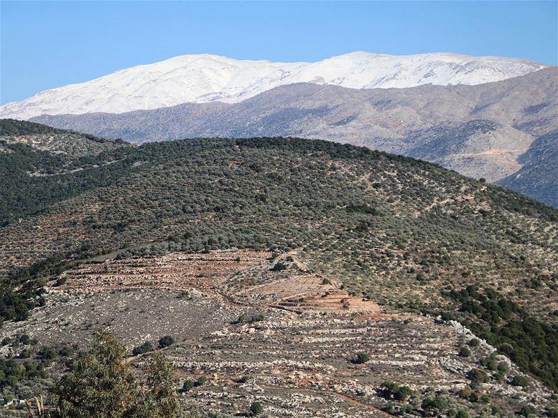 Covered summits 🌳❄️ (Hasbaya)