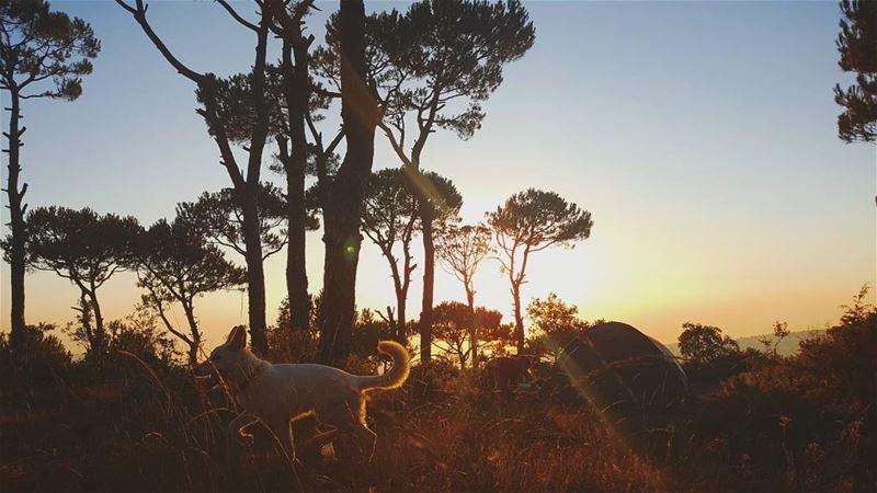 مين قال مش حلوة عيشة الكلاب🤔🐶... camping dogs goldenhour pinetree... (Marj Biskinta, Mont-Liban, Lebanon)