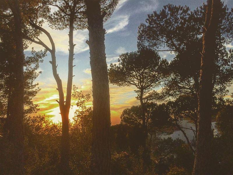natureoftheplanet1 lebanoninapicture yourlifeoutdoors ... (Baabdâte, Mont-Liban, Lebanon)