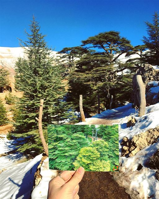 • Into The Forest • postcard  lebanon  trail  cedars  nature  outdoor ... (El Arz)
