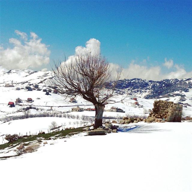 livelovelebanon amazing lebanon igers instamood instagram focus ...