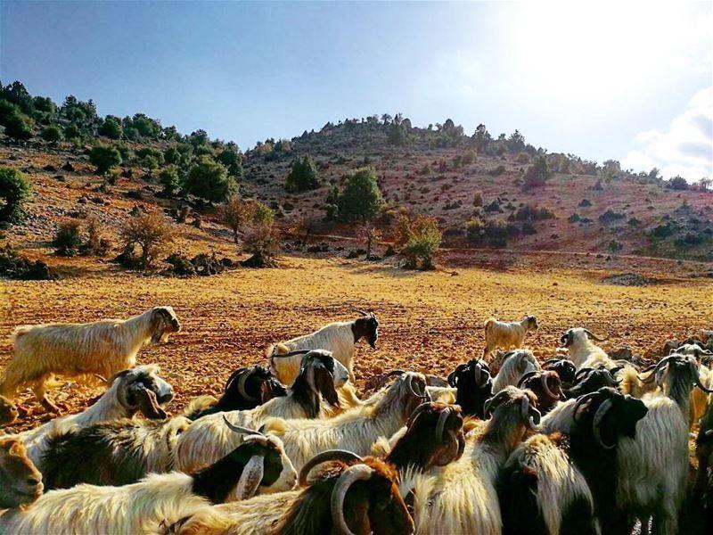north lebanon livelovelebanon libannord ilovelebanon ... (North Governorate)