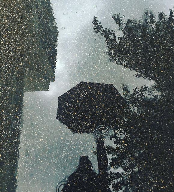 ☔️ rain reflection rain rainy mood tree outdoor nature rainymood ... (بيروت)