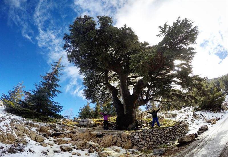 Hiking Barouk Cedars Lebanon 🌲❄ wildernessculture coupleswhohike ... (Arz el Bâroûk)