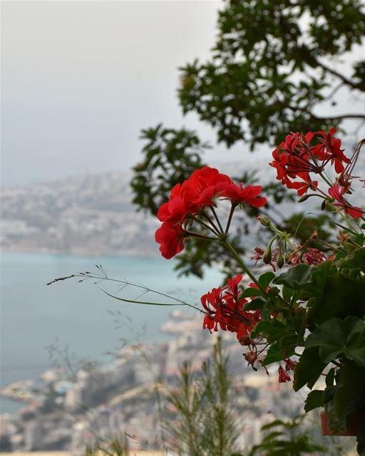 missing Lebanon 🇱🇧 (Beirut, Lebanon)