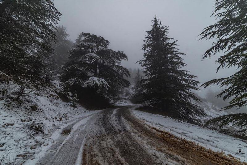 My favorite Road!!!... (Aïn Zhalta, Mont-Liban, Lebanon)