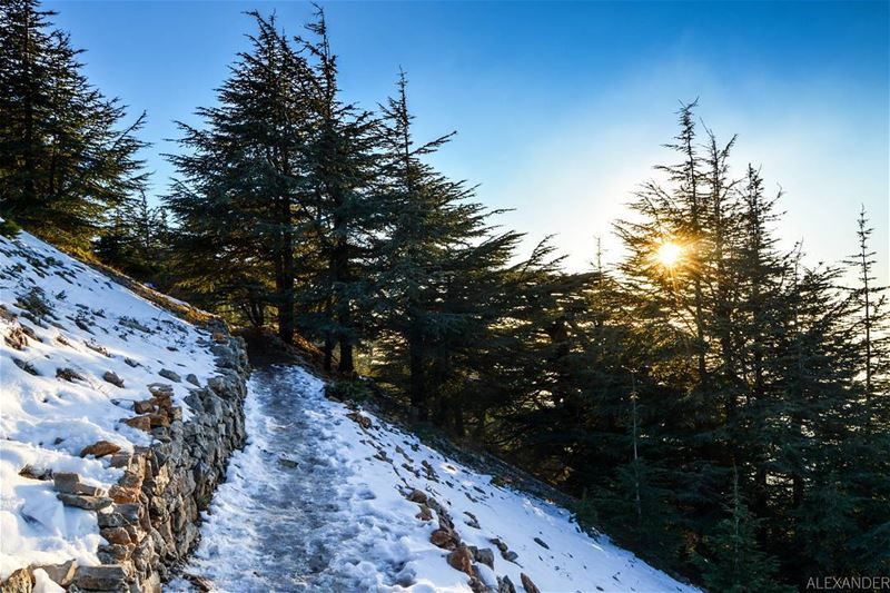 Fresh snowy evening | Barouk cedar reserve, Shouf Lebanon liveloveshouf.... (Al Shouf Cedar Nature Reserve)