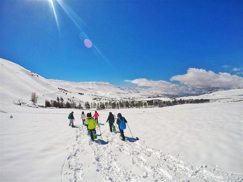 Hello winter ❄️ snowshoeing livelovelebanon snow winterwonderland ... (Cedars of God)
