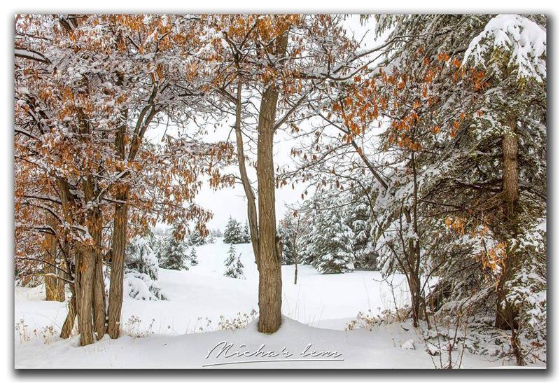 Seasons fusion . The golden season vs the white one thebestinlebanon ...