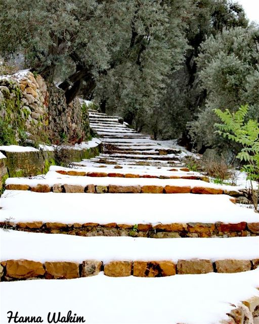 """My soul can find no staircase to Heaven unless it be through the Earth's... (Douma, Liban-Nord, Lebanon)"